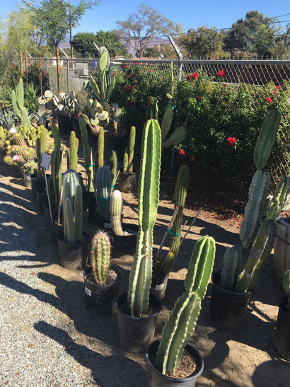 An assortment of cactus plants