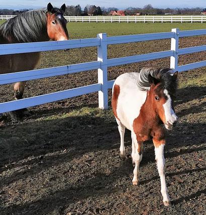 TESSA, die Stute mit der schiefen Schnute, ist wieder bei Annette u. Andre Engelhardt auf der Gut Aiderbichl Ballermann Ranch