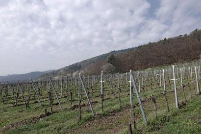 Wunderschöne Landschaft an der Südlichen Weinstraße