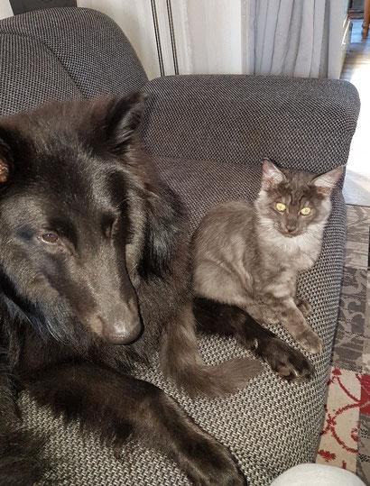 Yoshi mit seinem besten Freund Gizmo