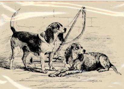 Bild: Stich aus England um 1890, Zwei berühmte Beagle-Champions