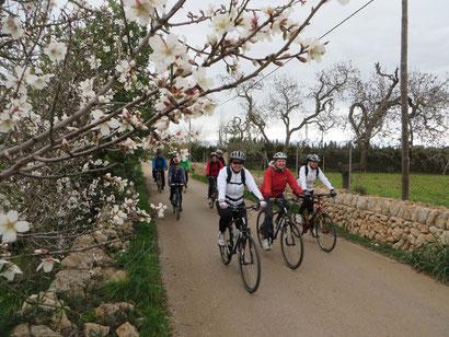 Beginn der Mandelblüte