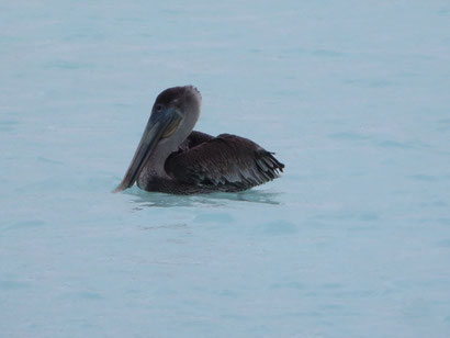 nur die Pelikane sind im Wasser