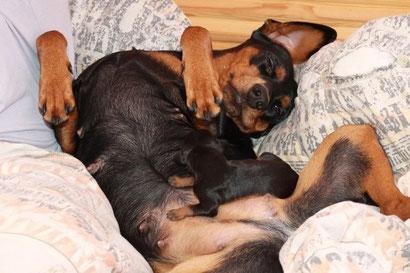 Auf Mamas Bauch schläft es sich doch am besten...