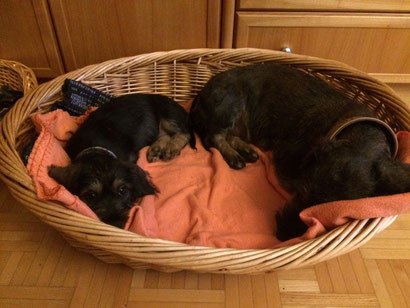 Beatrix mit Mama Annabelle - ausnahmsweise mal brav :)