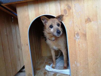 Hallo, ich bin Kylia und auch neu auf der Website, mit vielen anderen Hunden zusammen!