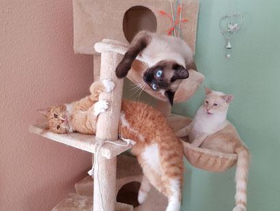 Tom, Gremlin & Gizmo