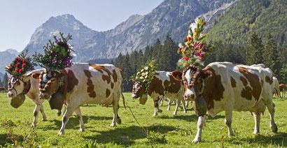 Die Qualität des Ghees ist abhängig von den Eigenschaften der Milch aus der es hergestellt wird