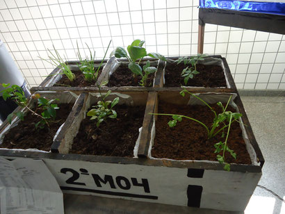 Agricultura Alternativa (2M04)