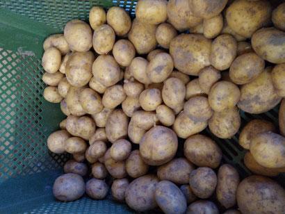 Kartoffel 2020