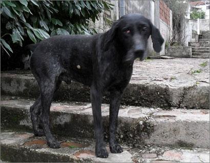 Strassenhund Patros - blind