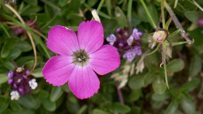 fleur cancer méditation pleine conscience programme MBCR
