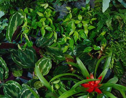 Verschiedenste Pflanzen sind in unsere Grüne Wand gepflanzt