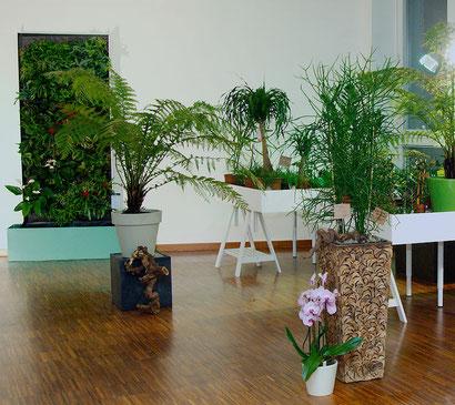 Grüne Wand bei Flowercompany in Wien
