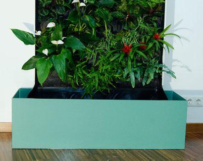 Grüne Wand Wasser auffangen