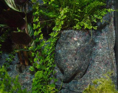 Detailaufnahme Grüne Wand Pflanzen befestigen