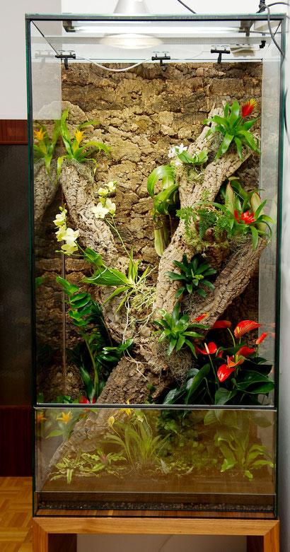 Terrarium bepflanzt