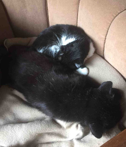 Lulu mit Puma