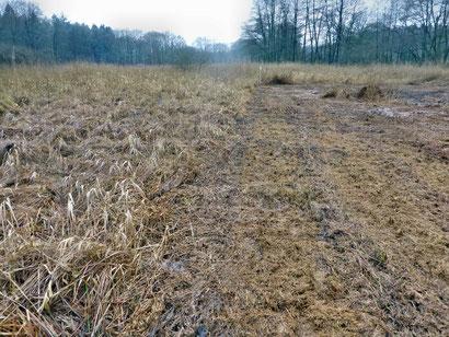 """Links: Ungemähter Bereich mit dichter Matte aus altem Gras - Rechts gemähter Bereich mit """"gehäckseltem"""" Altgras, das nun leichter verrotten kann."""