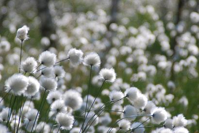 Der Kauf von Flächen ist der dauerhafteste Weg, um sie für den Naturschutz zu sichern. Seit 30 Jahren erwirbt die NABU-Gruppe Neumünster z. B. Flächen im Dosenmoor - zukünftig auch mit Hilfe der NABU-Stiftung Naturerbe Neumünster.