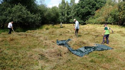 Gemeinsam aber mit Abstand: Feuchtwiesenpflege im Dosenmoor. Das Mahdgut wird mit Hilfe einer großen Plane von der Fläche gezogen.