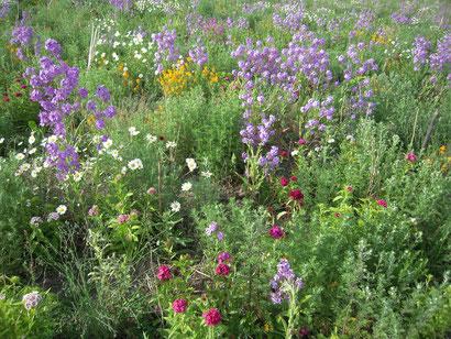 Helfen solche Flächen seltenen Insektenarten?