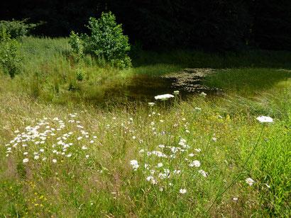 Blütenreicher Wiesenbereich an einem der Gewässer am Fldermauswald.