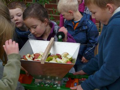 Vor dem Saftpressen mußten die Äpfel zerkleinert werden.