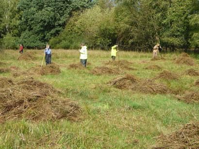 Handarbeit ist in der Landschaftspflege auf den NABU-Feuchtwiesen im Dosenmoor gefragt.