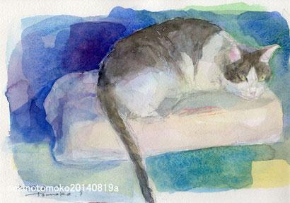 枕の上のネコ