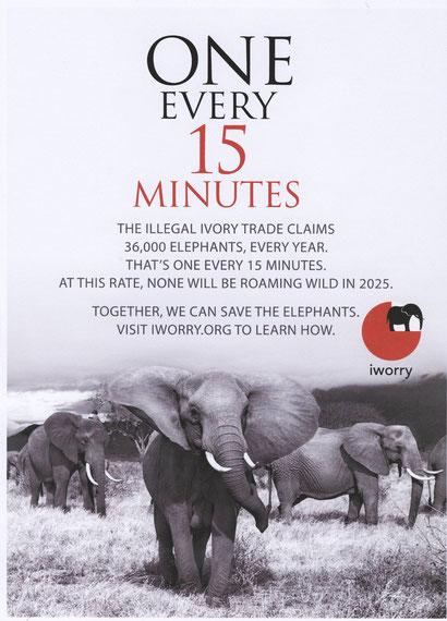 Alle 15 Minuten stirbt ein Elefant!