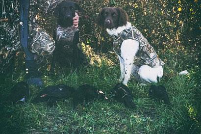 Hundeweste für die Krähenjagd