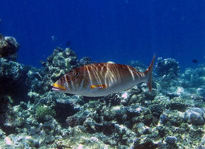 рыбы фотографии