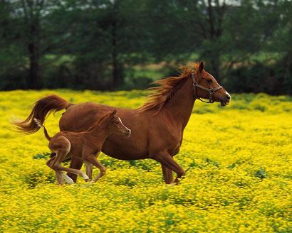 лошади, пони, зебры фотографии