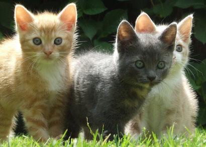 猫の3兄弟