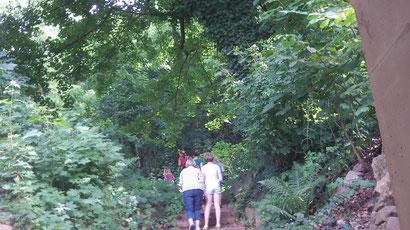In den Wald hinein.