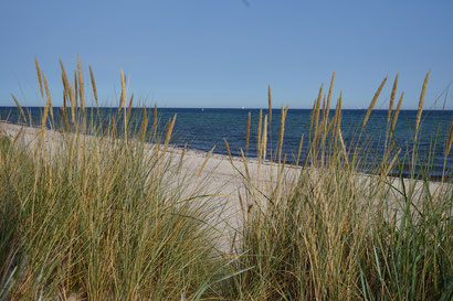 Strandgenuss, Dünengras, Meeresblick