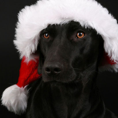 Rania Weihnachten 2009