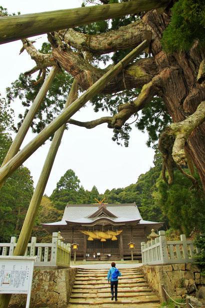 隠岐の島 京見屋分店 ブログ 玉若酢神社の春