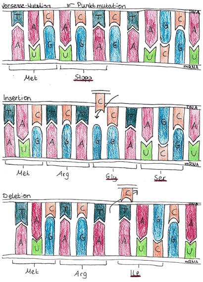 Abb. 2: DNA-Mutationen