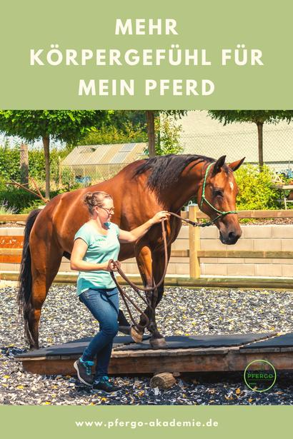 Mehr Körpergefühl für mein Pferd! Ergotherapie im Pferdetraining: So trainierst Du das Körpergefühl Deines Pferdes spielend!