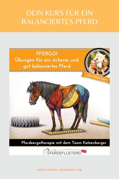 Ergotherapie für Pferde: Mit propriozeptivem Training zu einem besseren Körpergefühl für Dein Pferd.