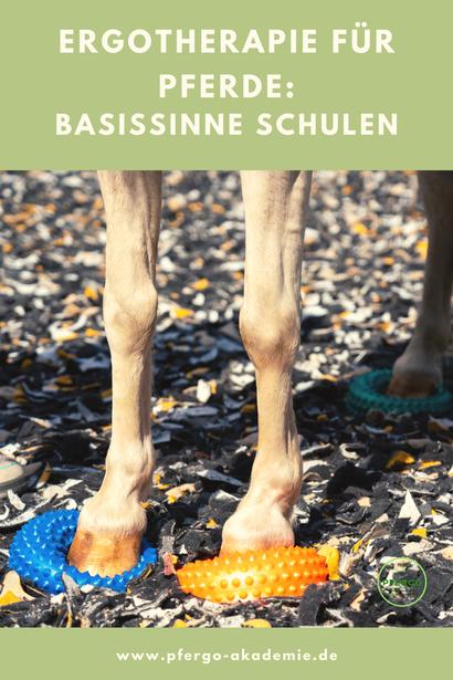 Ergotherapie für Pferde. Schulung der Basisinne mit Balancepads