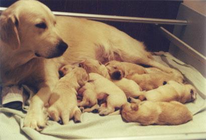 Tutto Il Vero E Il Falso Sulla Sterilizzazione Noi Animali