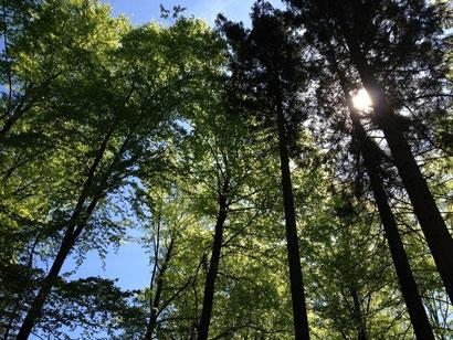 Naturnaher Buchen-Tannenmischwald