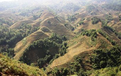 Paysages de rizières dont on ne se lasse pas !