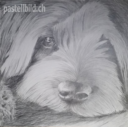 Felix, pencil drawing, Bleistiftzeichnung, Bleistift, pencil
