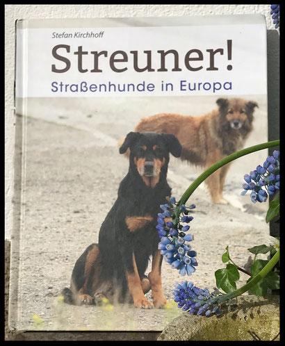 Kirchhoff Streuner! Straßenhunde in Europa
