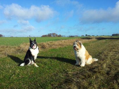 hundefreundlich, Hunde willkommen
