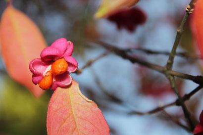 Der Herbst zeigt sich in seinen schönsten Farben. Foto: UKo